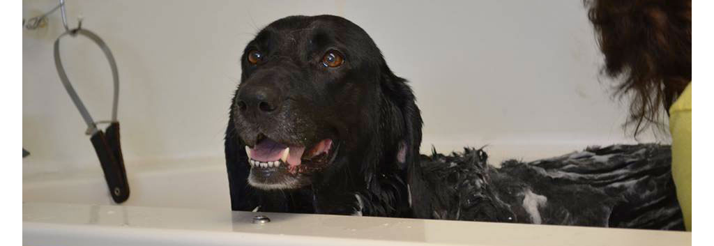 All breeds wash n wags dog self washing and grooming salisbury ma a real smile solutioingenieria Gallery