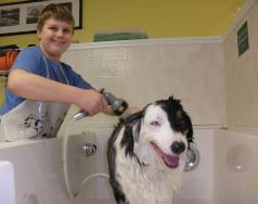 kid washing his dog at Wash N Wags in Salisbury MA